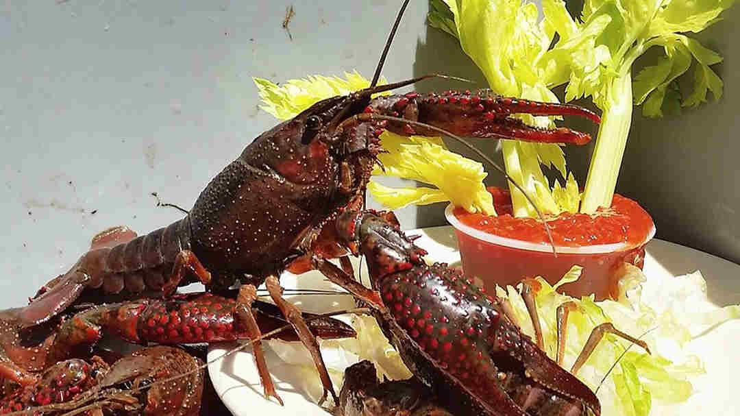 Lobster and drinks - The Savannah Insider