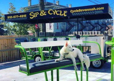 Dog on Bar Bike