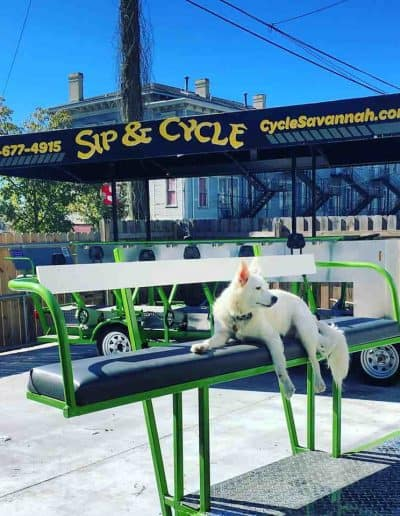 Dog on Bar Bike